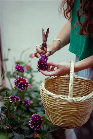Collecting Plants for Natural Dyeing from our garden's studio in Athens, Greece